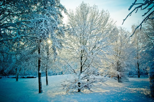 photos_snowy_landscape