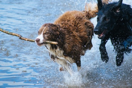 photos_dogs_water