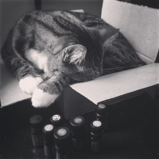 photos_cat_sleeping_box