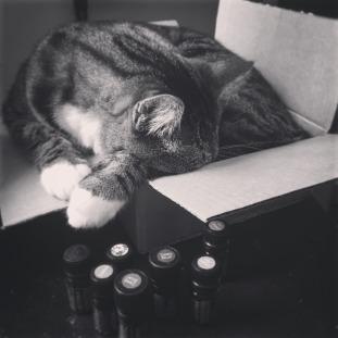 photos_cat_sleeping_box