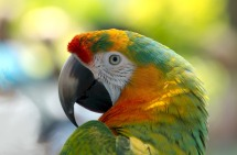 parrot-981615_1920