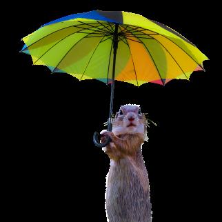 Meerkat umbrella