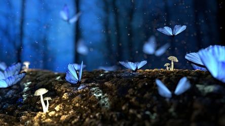 butterflies love idioms