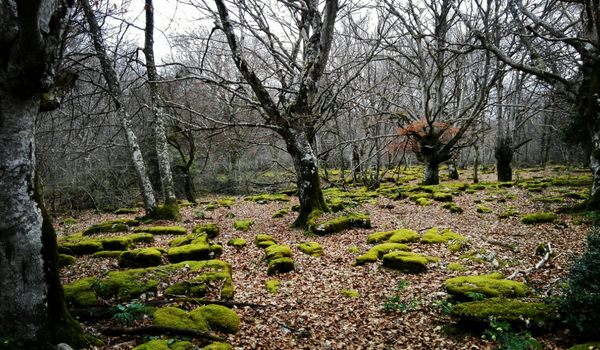 600 x 350 Woodland