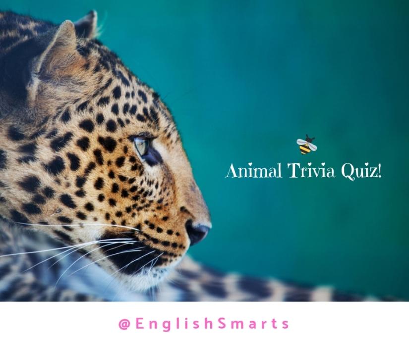 Animals And Nature Quiz